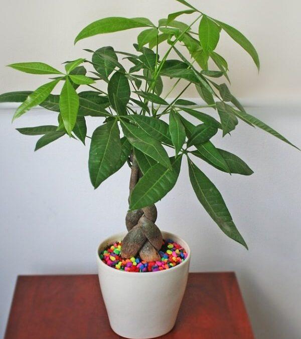 7 loại cây trồng trong nhà không cần ánh sáng cho phong thủy cực tốt